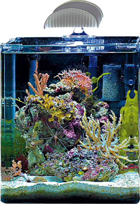 nano marinus complete plus dennerle aquariumplus webwinkel. Black Bedroom Furniture Sets. Home Design Ideas
