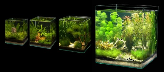 nano cube dennerle aquariumplus webwinkel. Black Bedroom Furniture Sets. Home Design Ideas