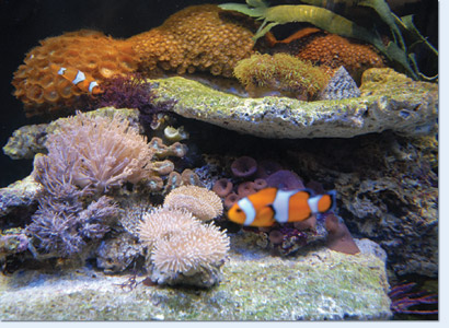 Aquarium LED verlichting - AquariumPlus WebWinkel